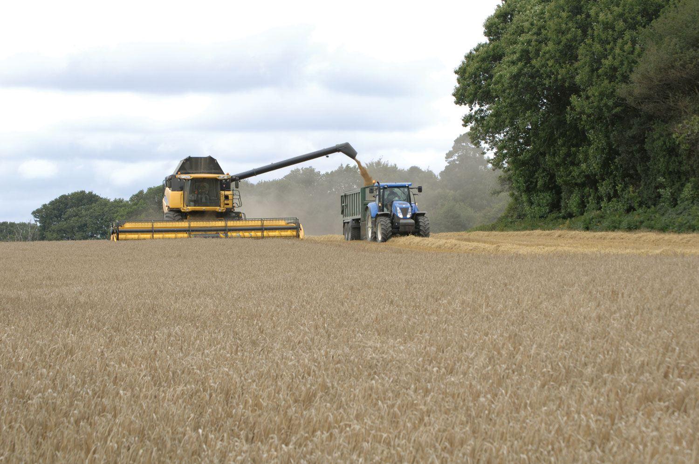 Harvest Update Langmead Group